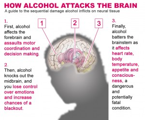 alcohol-the-brain