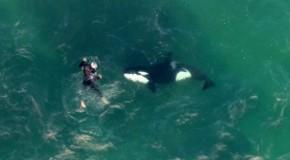 """""""Dansul"""" dintre un neozeelandez şi o balenă ucigaşă a devenit viral-VIDEO"""