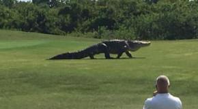 """Un aligator IMENS a surprins turiştii din Florida. """"Ăsta chiar este un dinozaur""""."""