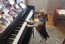 Câinele acesta face spectacol! Patrupedul cântă la pian cum nici oamenii nu reușesc uneori! Privești și te minunezi!