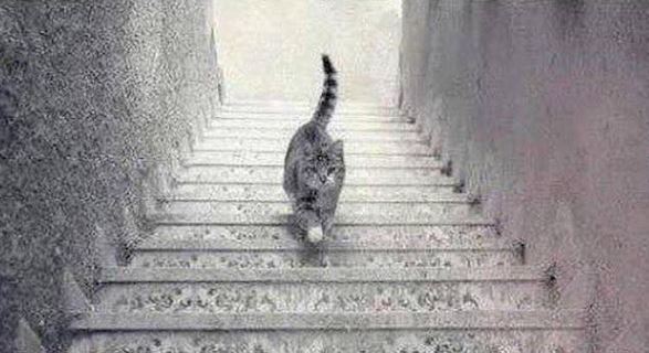pisica scari urca coboara