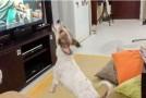 """""""Despacito"""", VIRAL şi printre animalele de companie. Cum reacţionează un căţel când aude la TV melodia favorită"""