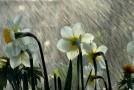 Vremea în septembrie. ANM anunță ploi abundente și temperaturi mai ridicate decât cele normale