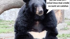 Au crezut că animalul lor de companie era un câine, dar după doi ani au aflat că era un urs