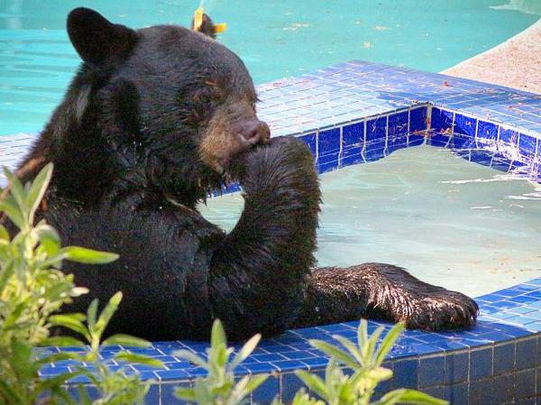 bear-in-hot-tub-2