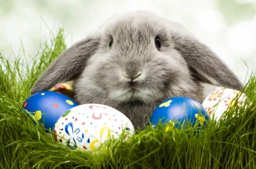 Cele mai tari bancuri despre iepurașul de Paște!