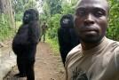Selfie cu gorile, devenit viral pe Facebook!