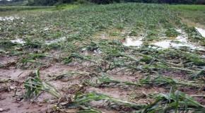 Inundațiile au calamitat 5.400 hectare de culturi agricole din județul Vaslui