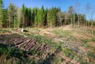 România, locul în care sunt distruse ultimele păduri ale Europei – presa germană