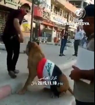 Daca-Politia-aduce-caini--un-tanar-s-a-dus-la-protest-cu-----leul--Video-