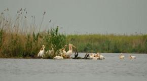 Dunărea s-a micşorat cu 134 de kilometri din cauza oamenilor