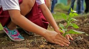 """Sistemul imunitar al copiilor din Finlanda a fost schimbat, după ce creșele au construit """"mini păduri"""""""