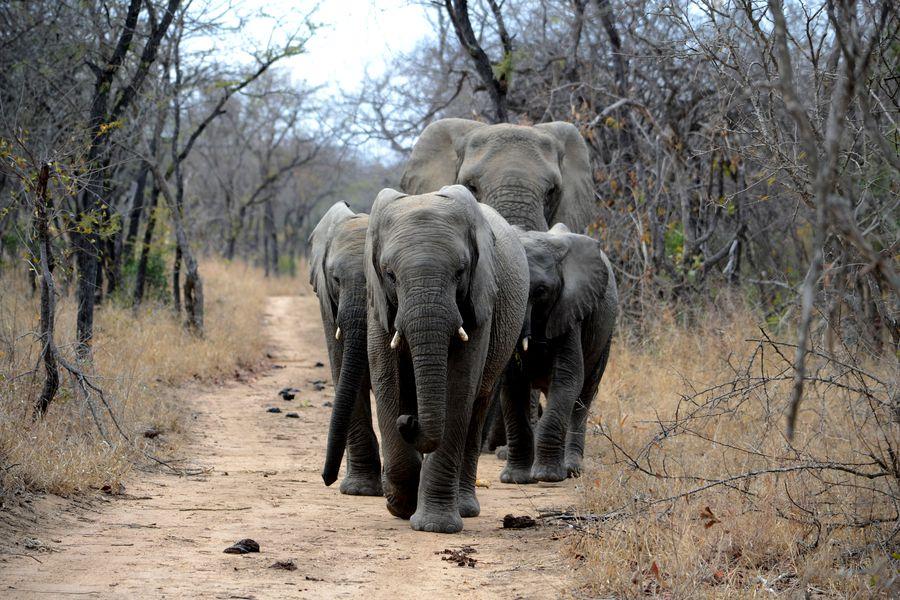 elefant-african-specie-disparitie-unsplash_descopera-2