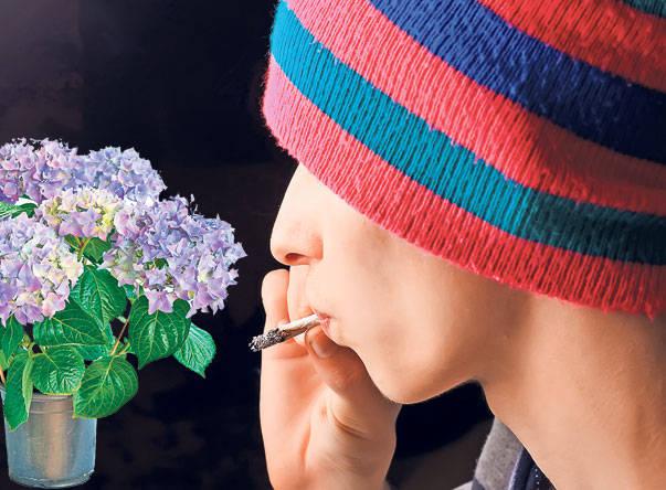6-baiat-hasis-droguri-marijuana-shutterstock_46263577_be34a06486